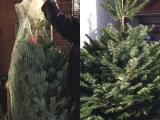 Weihnachtszeit bei Lilamalerie #16 – oder – Weihnachtsgedicht: DerWeihnachtsbaum