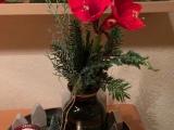 Friday-Flowerday – oder – WeihnachtlicheAmaryllis