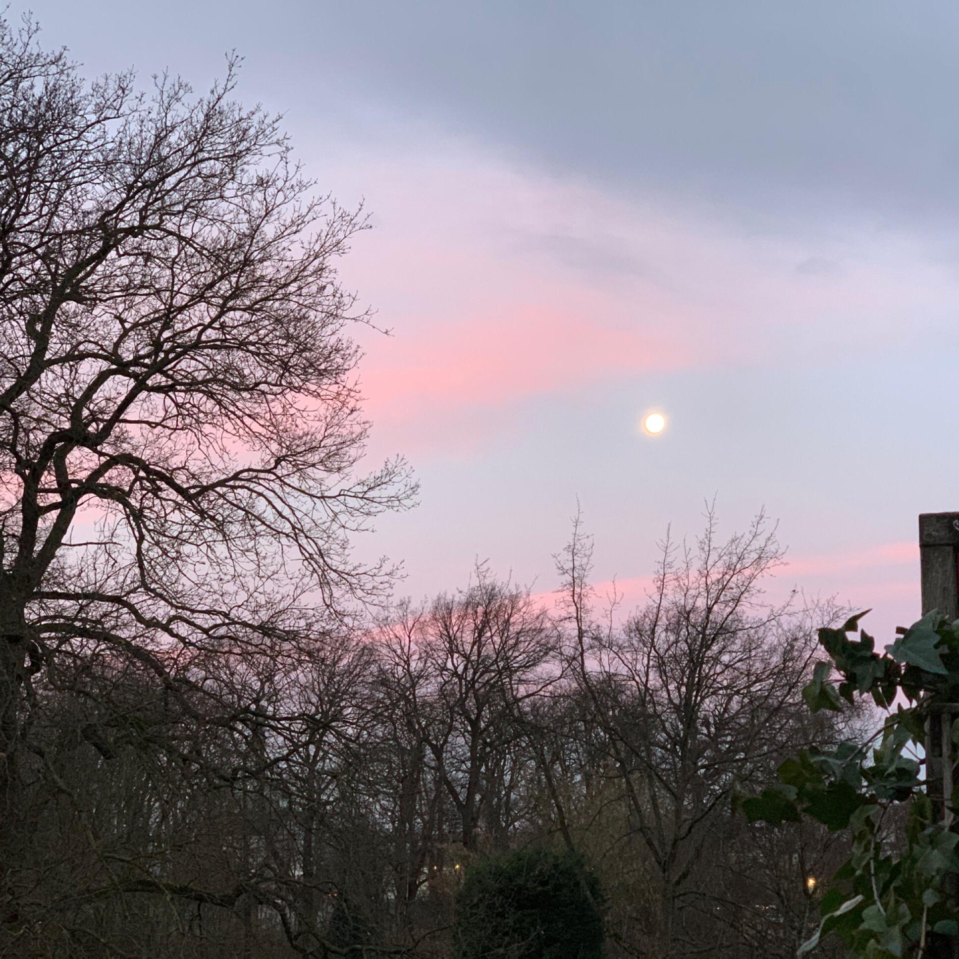 12 von 12 im Januar 2020 – oder – Von Morgenröte, einem Winterspaziergang und Bügeln mit der Queen