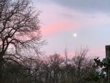 12 von 12 im Januar 2020 – oder – Von Morgenröte, einem Winterspaziergang und Bügeln mit derQueen