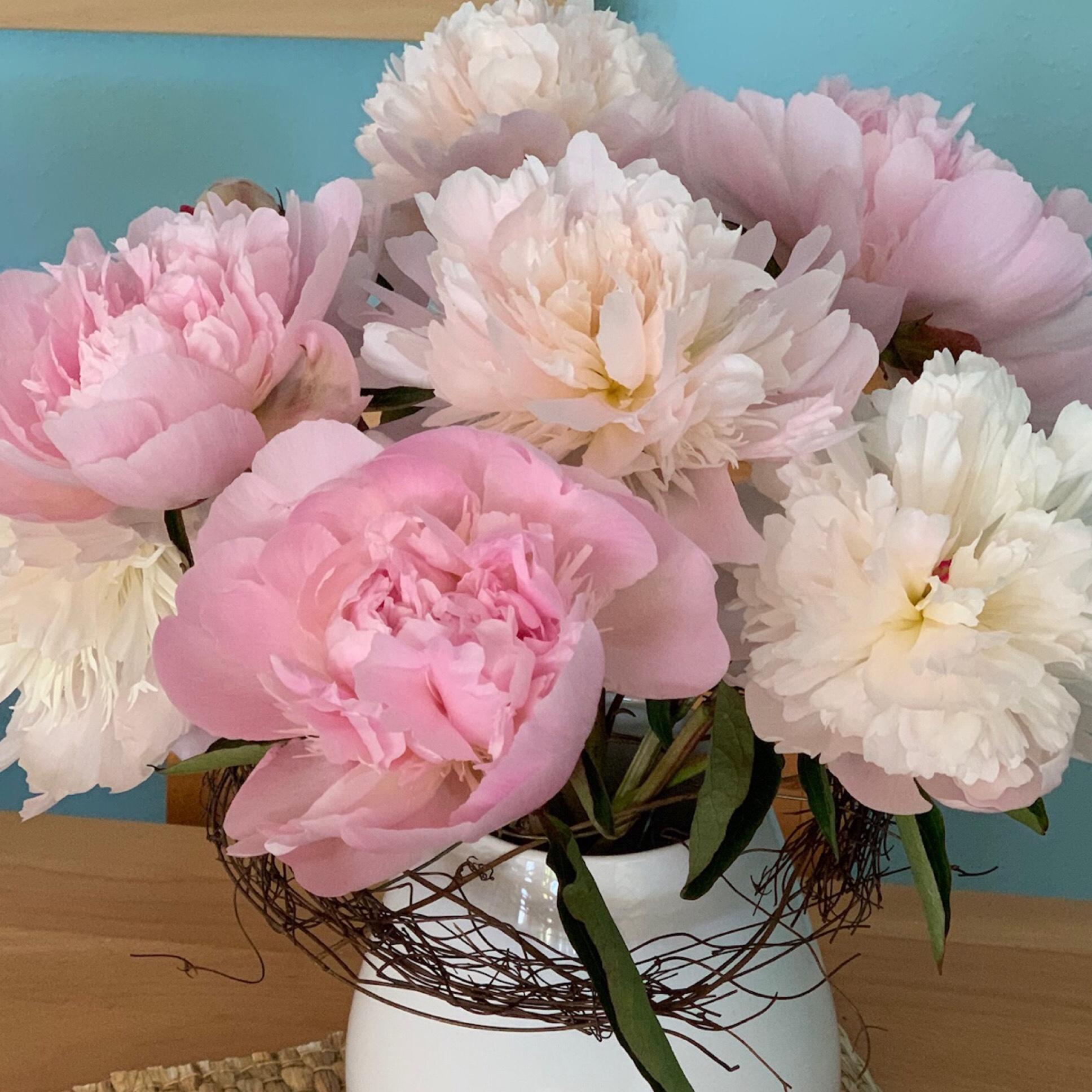 Friday-Flowerday – oder – Volle Pracht voraus: Pfingstrosen
