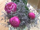 Friday-Flowerday – oder – Pfingstrosen#3