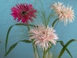 Friday-Flowerday – oder – CrazyGebera