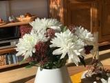 Friday-Flowerday – oder – Große und kleineBlüten