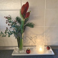 Friday-Flowerday - oder - Endlich: Amaryllis