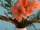 Decemberfeelings #11 : Friday-Flowerday – oder – Von der Knospe zurSchönheit