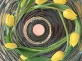 Friday-Flowerday – oder –Tulpen-Karusell