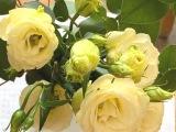 Friday-Flowerday – oder – Eustoma undEukalyptus