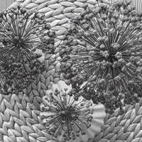 Friday-Flowerday - oder - Kunstvolle Allium und die letzten Pfingstrosen