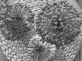 Friday-Flowerday – oder – Kunstvolle Allium und die letztenPfingstrosen