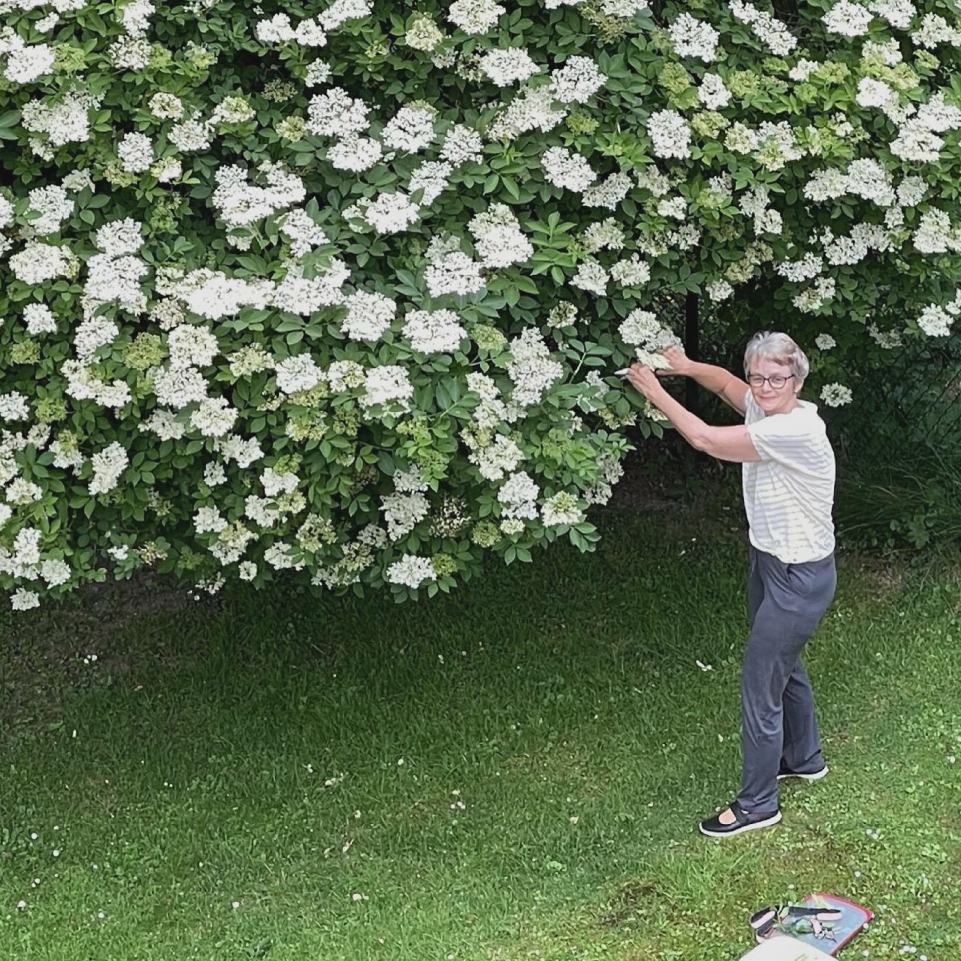 12 von 12 – oder – Von Holunderblüten, Rharbarber und fröhlicher Grillerei