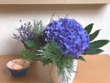 Friday-Flowerday – oder – Hortensie, auch in der Vase eineSchönheit